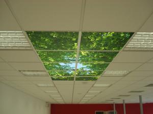 Плитка с изображением деревьев