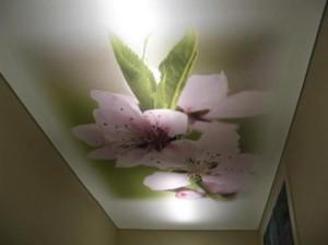 Изображение цветов с подсветкой